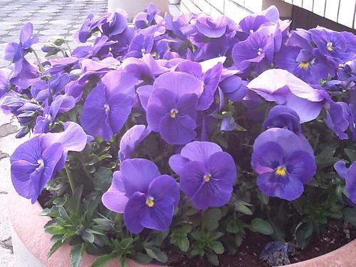 24iPad2 Flower2