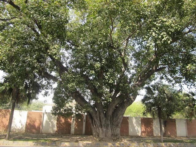 M M Alam Rd, Lahore