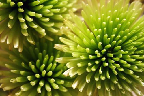 [94/365] Bloom