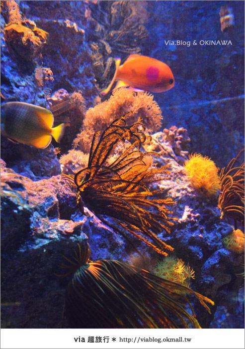 【沖繩景點】美麗海水族館~帶你欣賞美麗又浪漫的海底世界!19