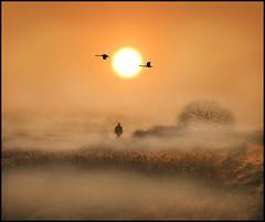 A winters stroll (adrians_art) Tags: trees winter people orange plants mist silhouette fog sunrise reeds kent wings frost flight bexley marshland muteswans airbourne crayfordmarshes sladegreenmarshes
