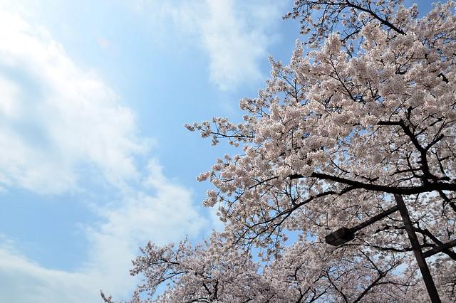 春の、曖昧な雲の青空。