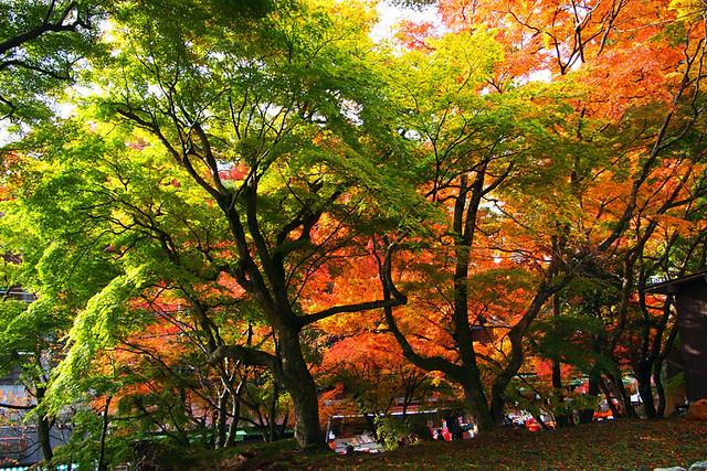 20101120_084656_談山神社