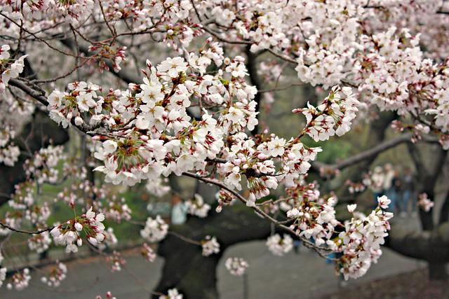 April plantings in Central Parki 044