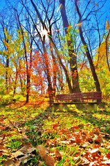 nikon d5000 photography: shaded bench in the woods -------- viewed 242x (norlandcruz74) Tags: park november autumn sun fall leaves bench liberty newjersey woods jerseycity empty seat nj parks foliage filter cruz seats jersey niko dslr benches emptyseat emptybench 2010 libertypark emptyseats norland crossstar d5000 norlandcruz
