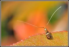 Proud Bug - 3 / 365 (ericmichel_def) Tags: bug nikon bokeh day3 d90 tamron90 project365