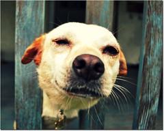 [フリー画像] 動物, 哺乳類, 犬・イヌ, 201104221100