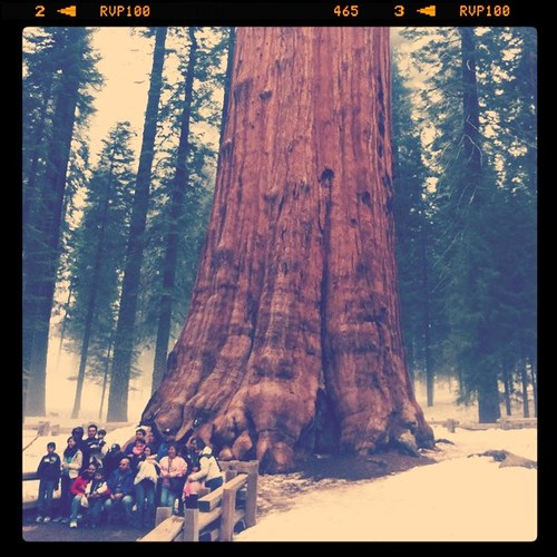 general sherman tree - largest tree on earth by eichg