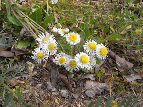 春の花々@明日香村-20