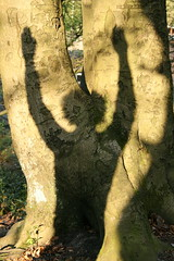 Spring Salute (FreshAirFreak) Tags: wood shadow tree woodland treetrunk bark pagan treeworship