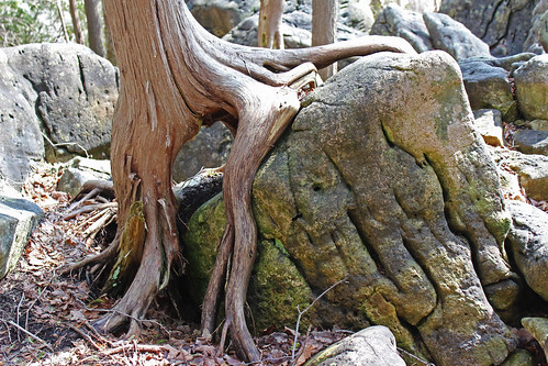 Jones Falls Mini-hike - Tree Meets Rock