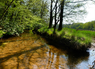 The cleanest babbling brook Leuvenum