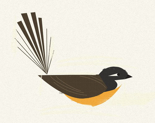 Fantail illustration