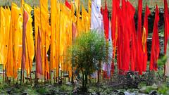 Prayer flags on staff  dar lcog, Tibet (reurinkjan) Tags: prayerflag lungta colorphotoaward    janreurink tibetanplateaubtogang kham buddhism tibet tibetan buddhist prayerflagsonstaffdarlcog 2010 sertalcounty ngulchu whiteprayerflagdarchokkarpo housetopprayerflagskhangtokdarchok