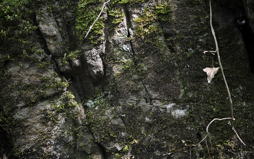 Mossy Rock Face at Puzzlewood