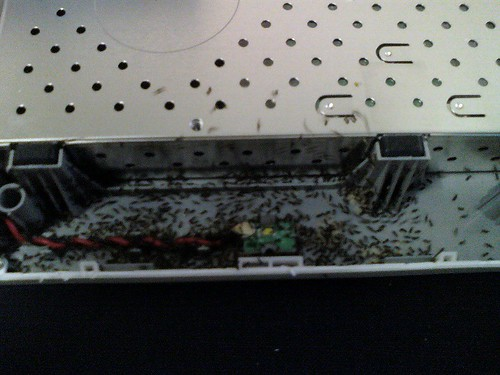 Ants in external hard drive