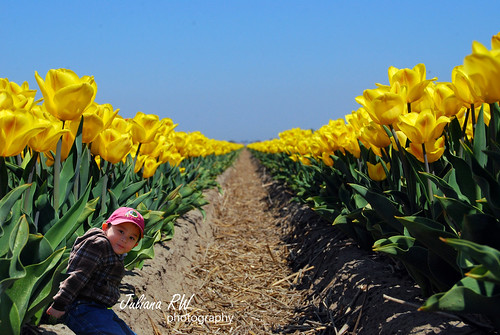 Photo shot at tulips field
