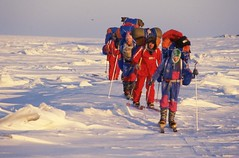 Skiers (Weber Arctic Expeditions) Tags: ice richard misha weber northpole frostbite arcticocean polarexpedition malakhov wardhuntisland fischerskis polarbridge polartraining capearkticheskiy dimitrishparo shparo