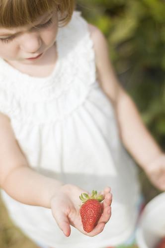 strawberry pickin'_0006