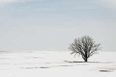 Lone Tree (Nick Chill Photography) Tags: winter snow cold tree nature landscape photography one flora nikon alone fineart scenic iowa lonely stockimage d300s nickchill