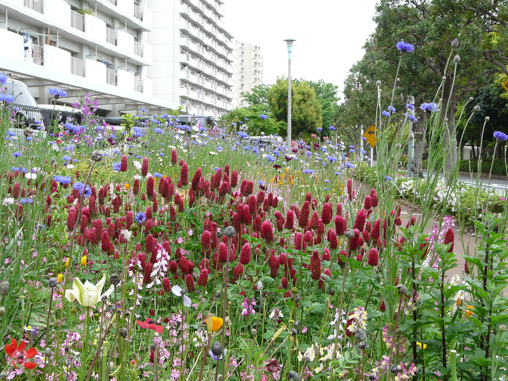 Edogawa Wildflowers