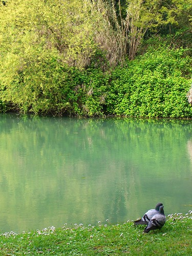 Rome Park with Ducks by Danalynn C
