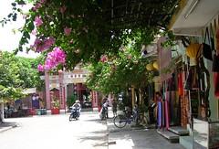 Bouganinvillea Providing Shade (mikecogh) Tags: 2005 street shop bougainvillea vietnam hoian fabric shade