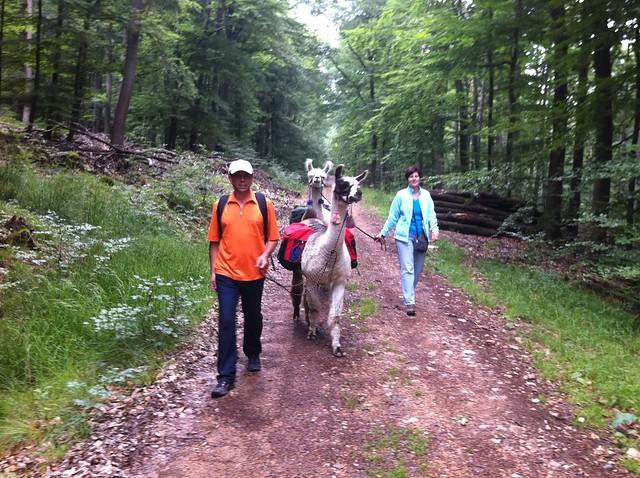 Lama-Trekking mit der Kisselmühle