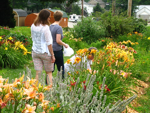"""""""shopping the yard"""" for daylilies"""