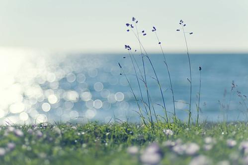 フリー写真素材, 花・植物, 海,