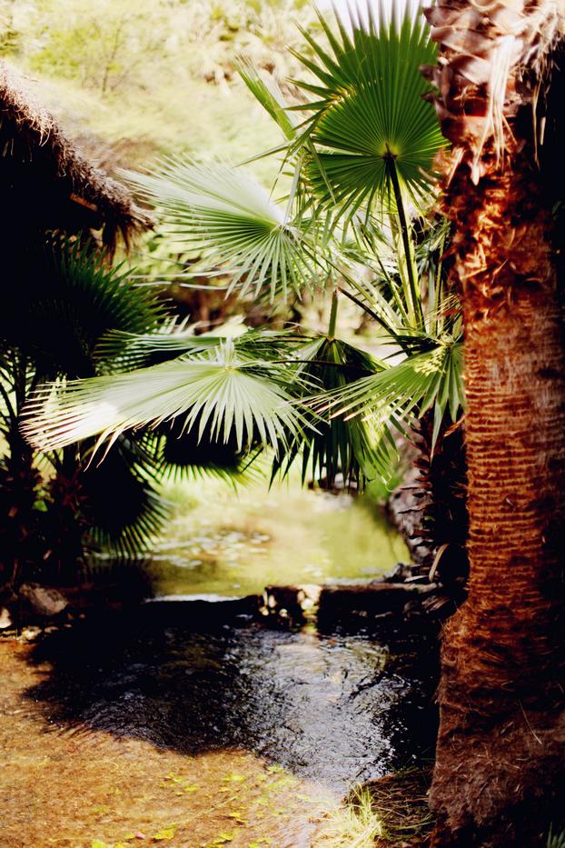 Jungle 05