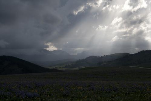 bighorn-wildflowers_8