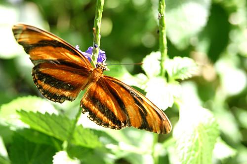 ButterflyPavilion12-butterfly
