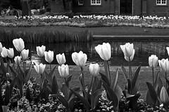 Park (me Photographie) Tags: park flowers blackandwhite flower art nature photography grey spring pond nikon flickr photoart bestofflickr tumblr ammephotography
