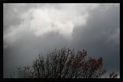 Sunshine on the treetop (Zelda Wynn) Tags: autumn nature sunshine weather clouds auckland raindrops troposphere newlynn zeldawynnphotography