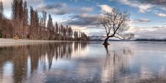 Roys Bay (Bradley Grove) Tags: lake lonely panorama reflection solitary tree wanaka water newzealand 064