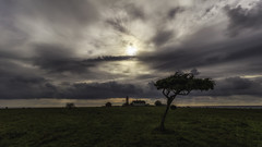 Lighthouse on the savannah (kaffealskare) Tags: savannahlikelandscape landscape clouds dramatic moln dramatiskhimmel tree openlandscape gotland nr lighthouse fyr outdoor sea balticsea stersjn hav sky attackfoto