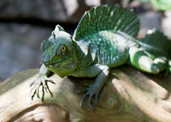 "Van2011 - aquar - iguana • <a style=""font-size:0.8em;"" href=""http://www.flickr.com/photos/30765416@N06/5797569569/"" target=""_blank"">View on Flickr</a>"