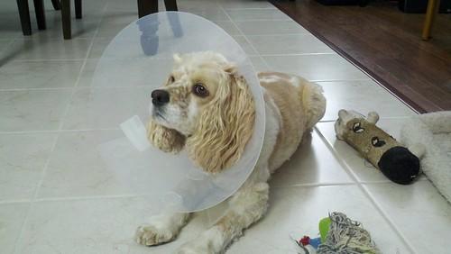 Poor Daisy