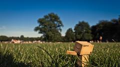 [24/52] Danbo im Stadtpark (nliebherr) Tags: amazon sommer hamburg sonne stadtpark danbo 52weeks revoltech canoneos7d danboard 52wochen tamron175028vc