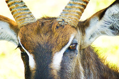 "PhotoFly Travel Club Kenya Safari 2011! • <a style=""font-size:0.8em;"" href=""http://www.flickr.com/photos/56154910@N05/5892998378/"" target=""_blank"">View on Flickr</a>"