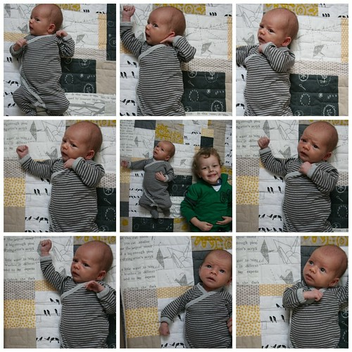 Leo collage