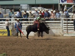 World's Oldest Rodeo - Prescott, AZ (midee1014) Tags: cowboy bull riding worlds western rodeo oldest