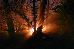 Encounters (Greg Foster Photography) Tags: trees light sun strange night dark lowlight nikon availablelight surreal nighttime horror rays