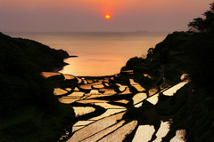 Sun Shattered (www.jasonarney.com) Tags: sunset sun water japan spring rice farm  ricefield saga   kyushu  riceterrace           southjapan genkaitown jasonarney japanscapes soakedricefield shelvedricefield stackedricefield