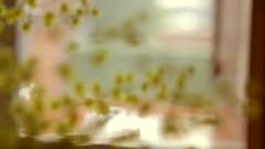 Tiempo... / Time... (Aida Distraida) Tags: flowers plants flores nature yellow plantas time live vida mimosas tiempo foals marchitar