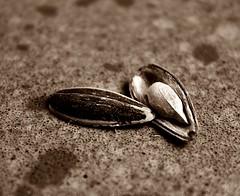 Pipas (nicopdta) Tags: macro comida pipa pipas semilla cáscara nicopdta