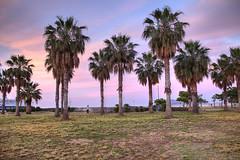 Next to the sea (Davide Argano) Tags: sea nature landscape golden tramonto mare natura porto hour palermo palma prato palme hdr foroitalico