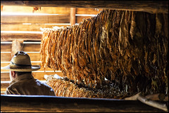 Cuba_2014_04_0284_IMG_2210 (_SG_) Tags: blue sunset holiday reflection water wasser sonnenuntergang urlaub cuba pflanze insel bauer caribbean farmer blau spiegelung ferien tobacco tabak kuba karibik tobaccoplant republicofcuba republikkuba
