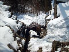 S5001987 (ndeeelite) Tags: winter ontario ice jack hiking hamilton niagara waterfalls keri webster 2009 tew decew